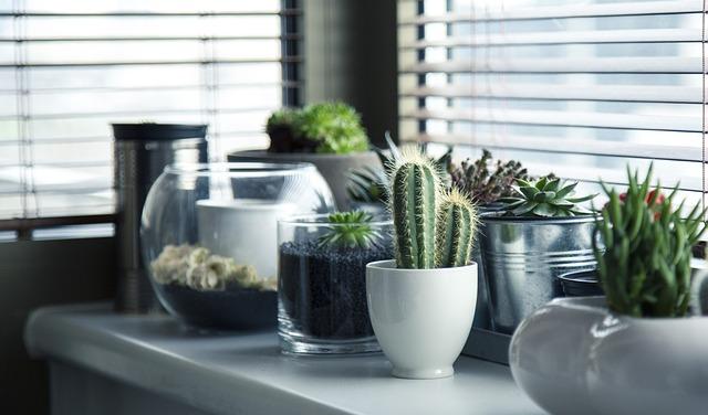 trasladar las plantas en una mudanza